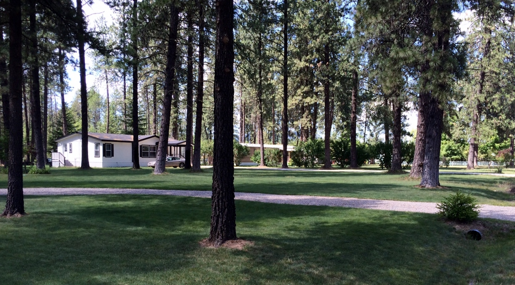 loon lake senior singles Balsam lodge is a wonderful historic home on the shore of pristine and beautiful loon lake this is a great place for family reunions or other big groups.